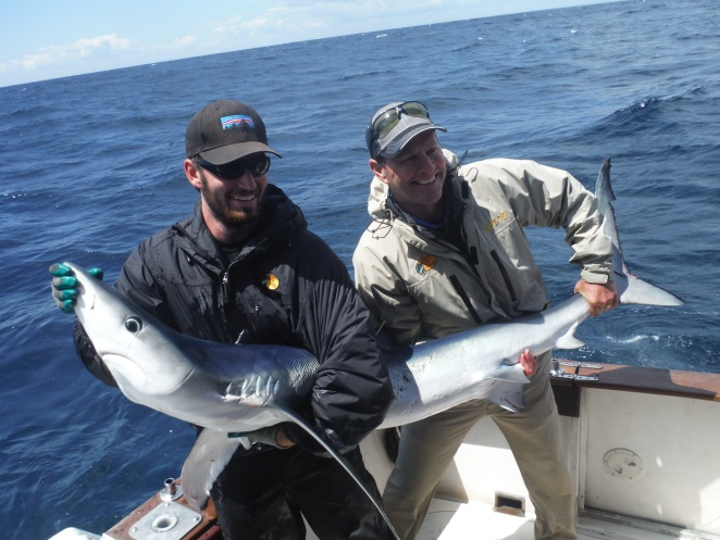 ATLANTIC ENCOUNTERS: ANGLING BLUE SHARK FOR BIODIVERSITY RESEARCH